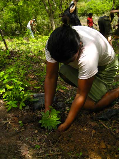 Tree Planting - Carbon Offsetting Air Charter Music Tours